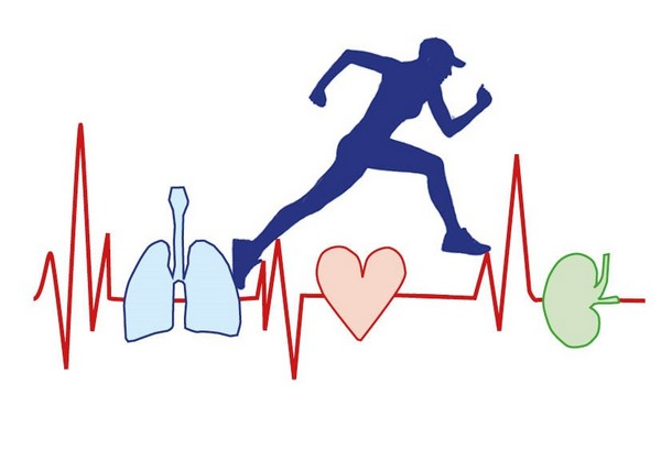 ¿Que ocurre en nuestro cuerpo cuando corremos?