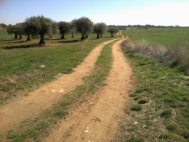 Ruta Trail Running Loeches, Pozuelo, Valverde y Torres (Madrid)