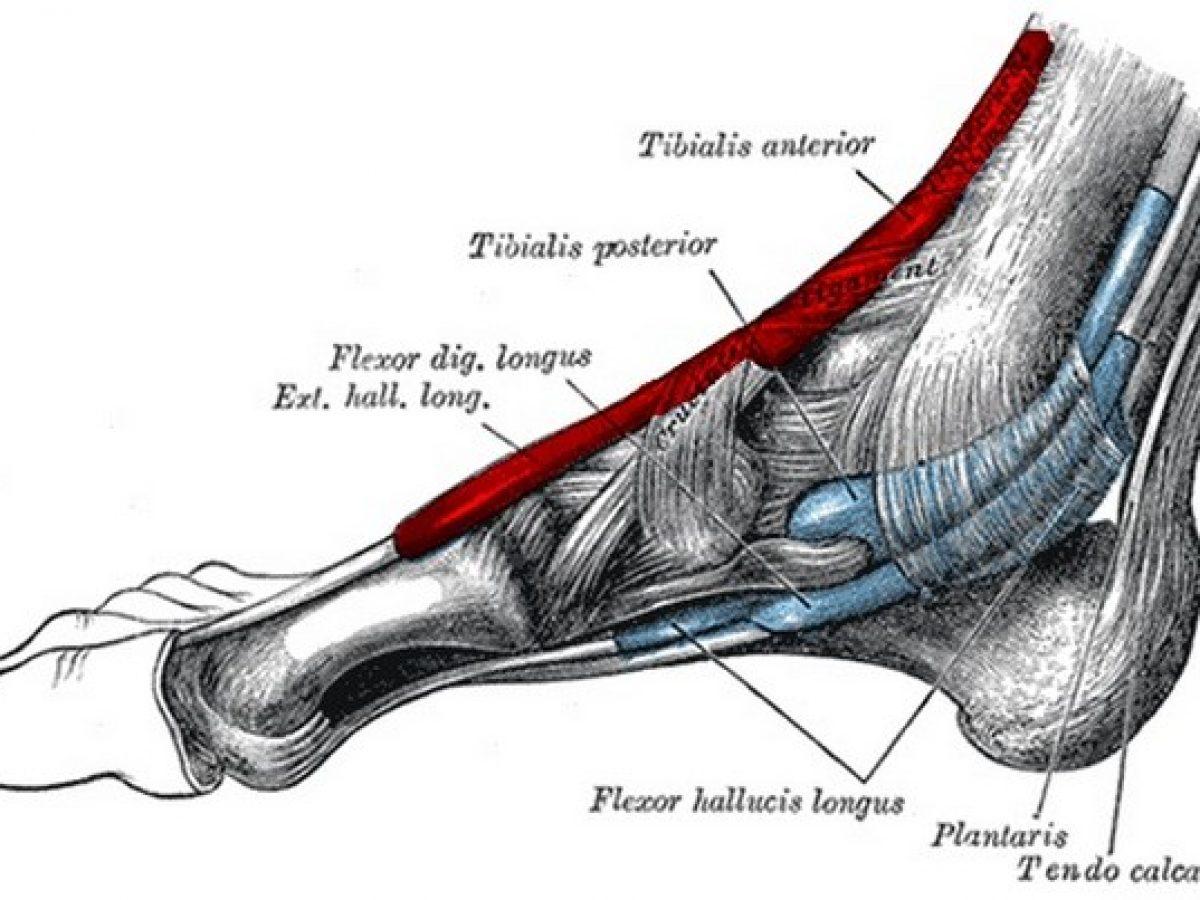 dolor agudo cerca del hueso del tobillo