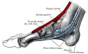 como curar la tendinitis del empeine del pie