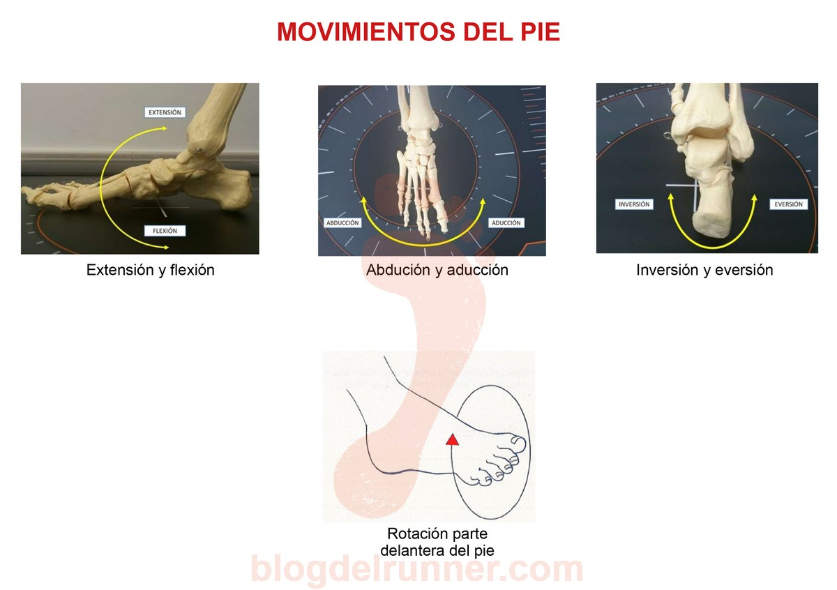 Movimientos del pie