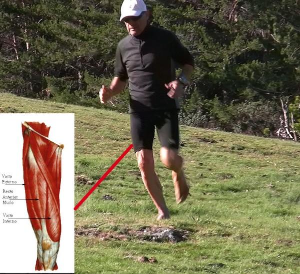 Cómo correr descalzo o minimalista en la naturaleza - Cuádriceps