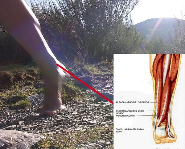 Cómo correr descalzo o minimalista en la naturaleza - Flexor largo de los dedos