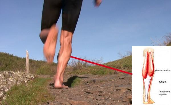 Cómo correr descalzo o minimalista en la naturaleza - Tríceps sural