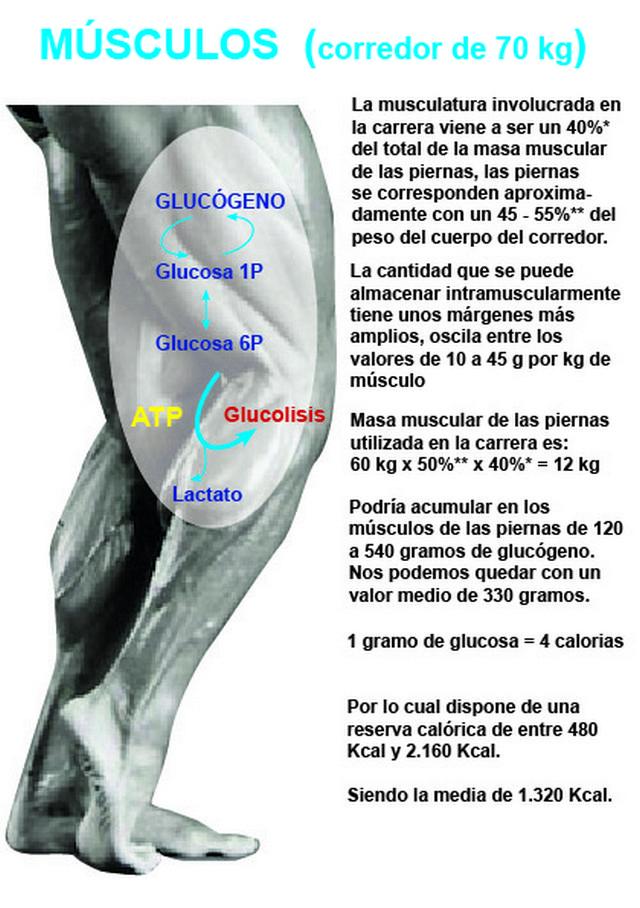 Glucógeno almacenado en las piernas