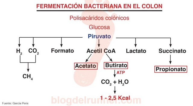 Fermentación bacteriana en el colon