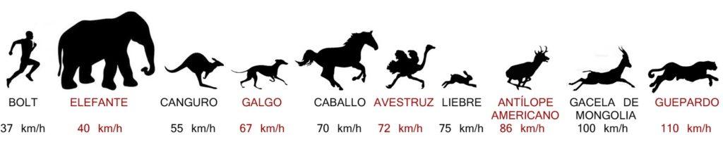 Comparación de las velocidades máximas en sprint de cada especie