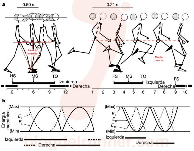Comparación entre andar y correr