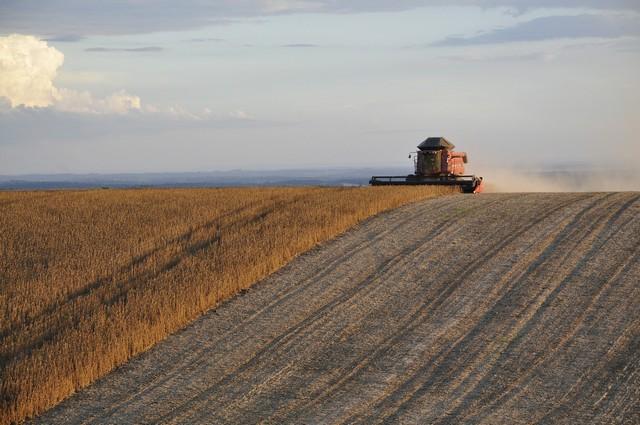 La sobreexplotación agrícola y el déficit de magnesio