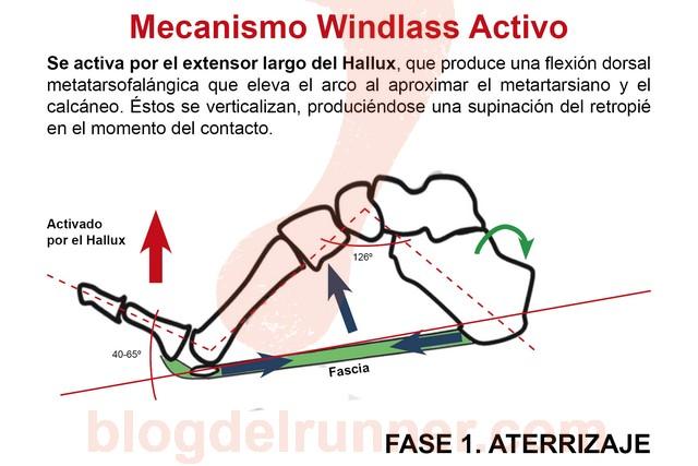 Windlass Activo. Fase 1 - Aterrizaje