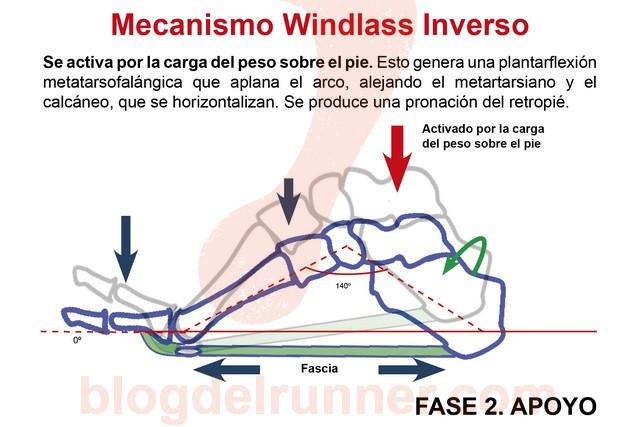 Windlass Pasivo. Fase 2 - Apoyo