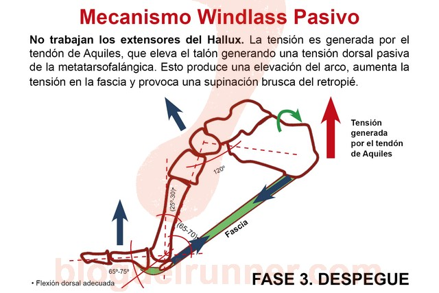Windlass Pasivo. Fase 3 - Despegue